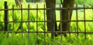 Yotsume-gaki