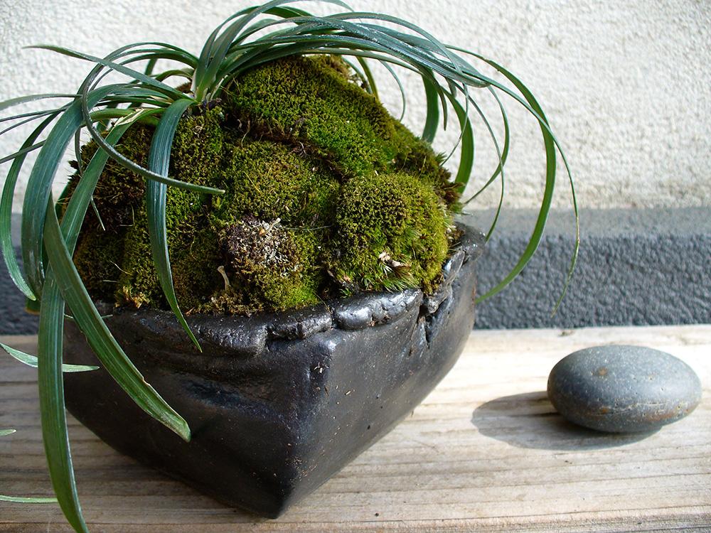 Kusamono - Ophiopogon japonica