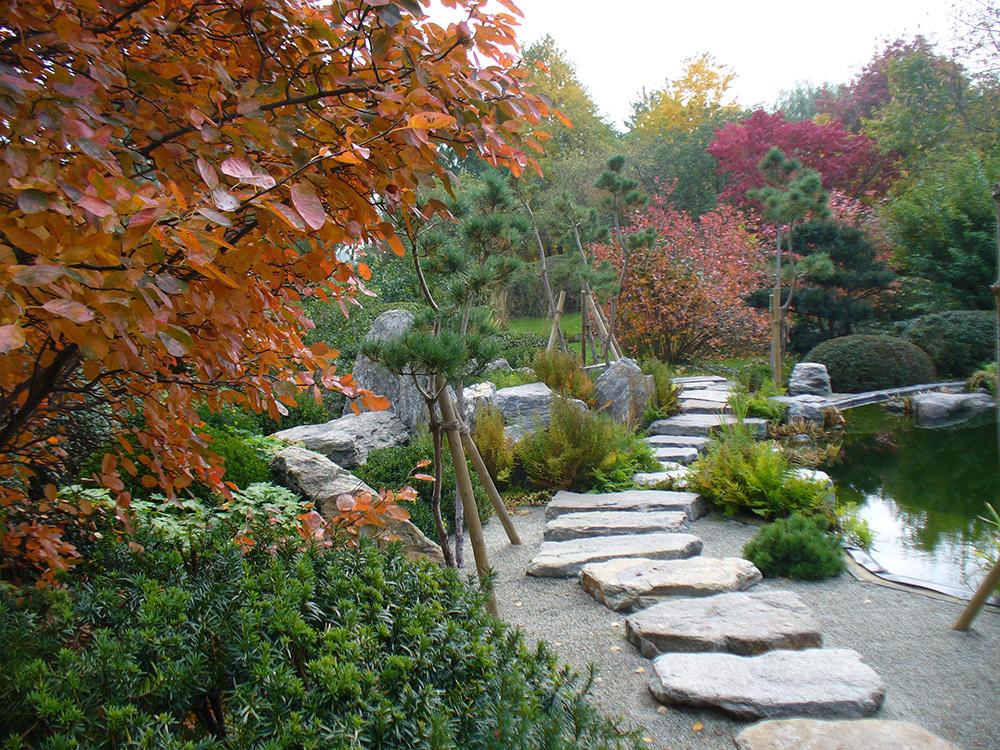 Amelanchier am Koiteich im Herbst