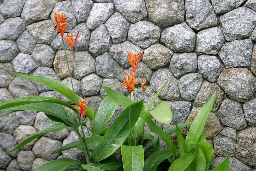 garden on Pukhet