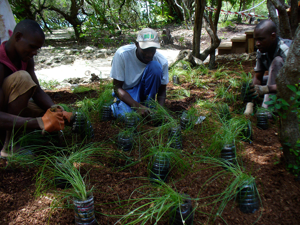 planting grasses on Vamizi island, Mozambique