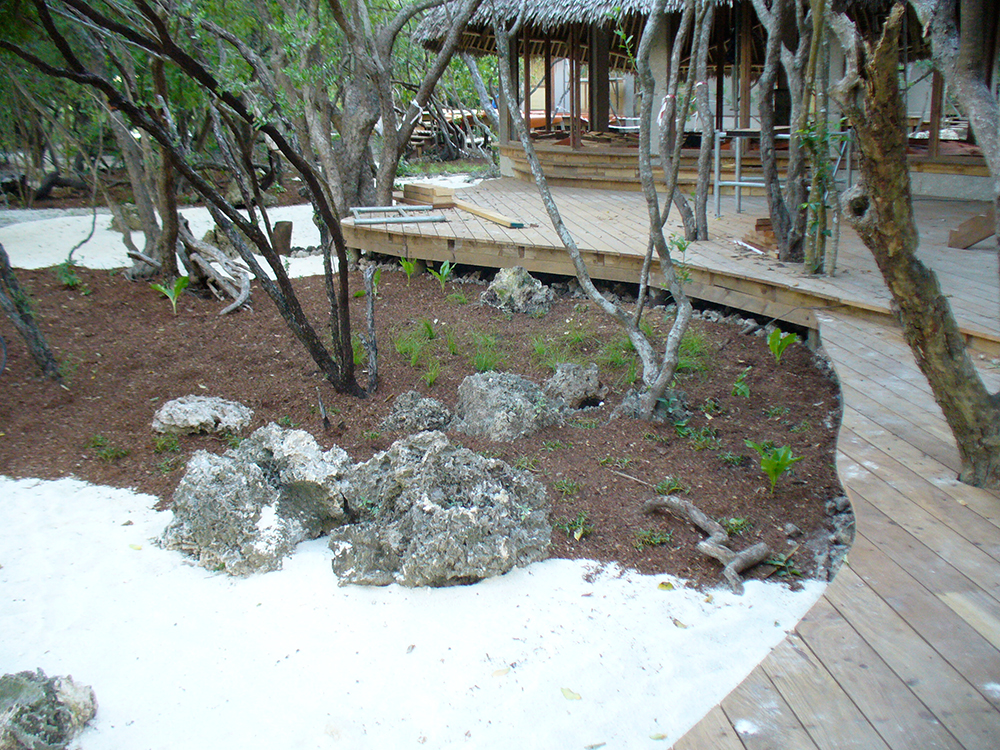 garden on Vamizi island, Mozambique
