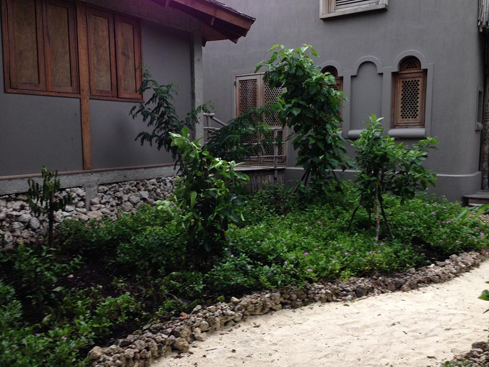 planted garden trees in Mozambique, Vamizi island