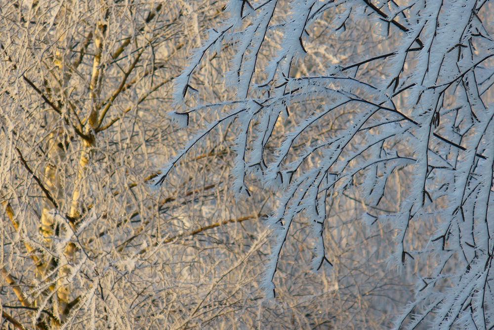 Frost an Zweigen