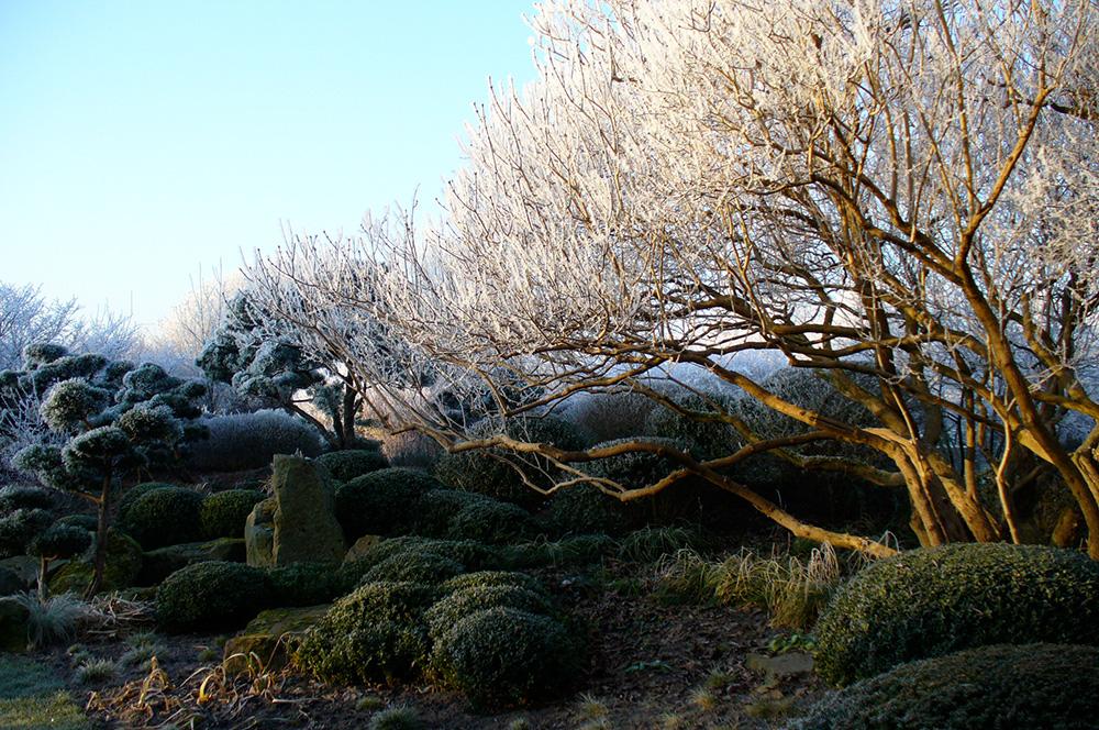 Flieder im Frost