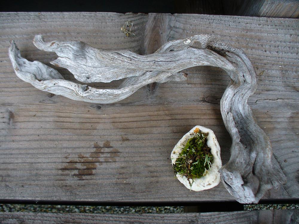 Kusamono - mit Moos bepflanzte Muschel