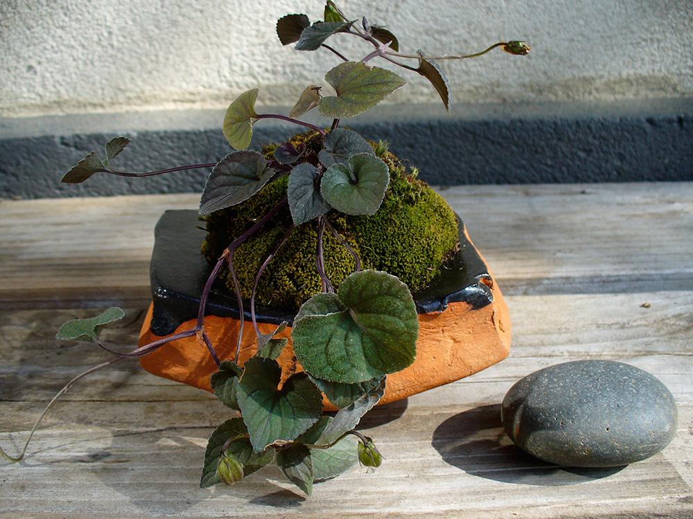 Kusamono - Veilchen