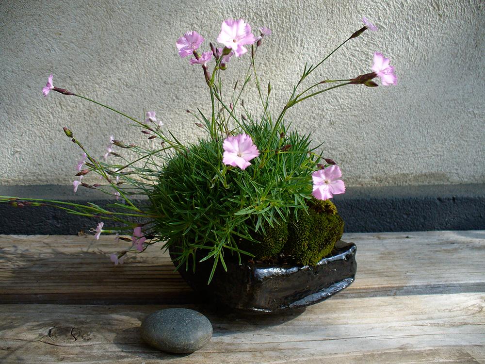 Kusamono - Nelke