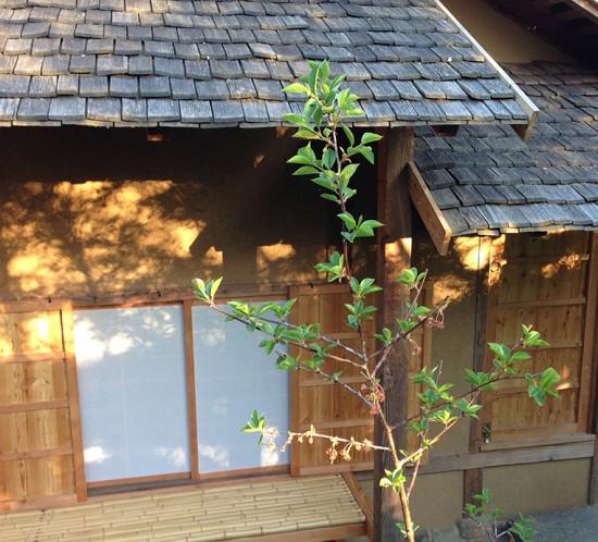 Teehaus im japanischen Garten in Bartschendorf
