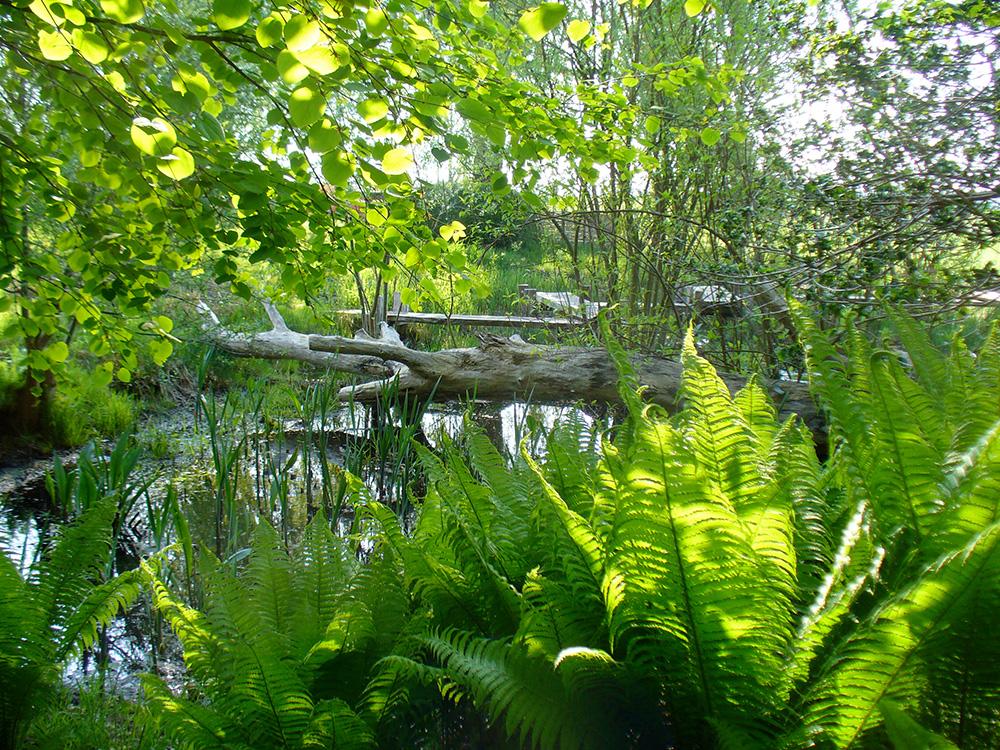 Sumpfzone im japanischen Garten in Bartschendorf