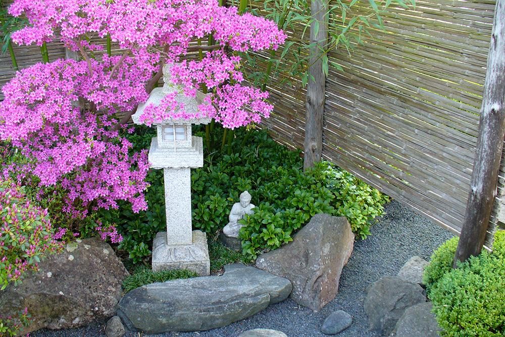 Azaleenblüte im japanischen Garten in Bartschendorf