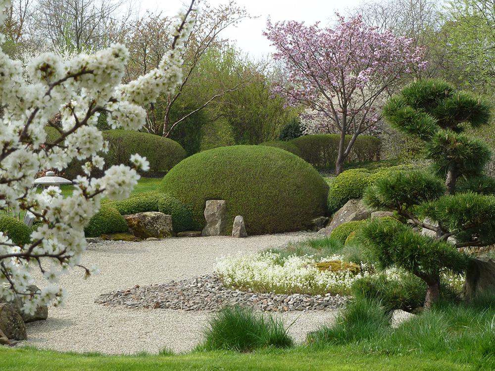 Kirschblüte im japanischen Garten in Bartschendorf