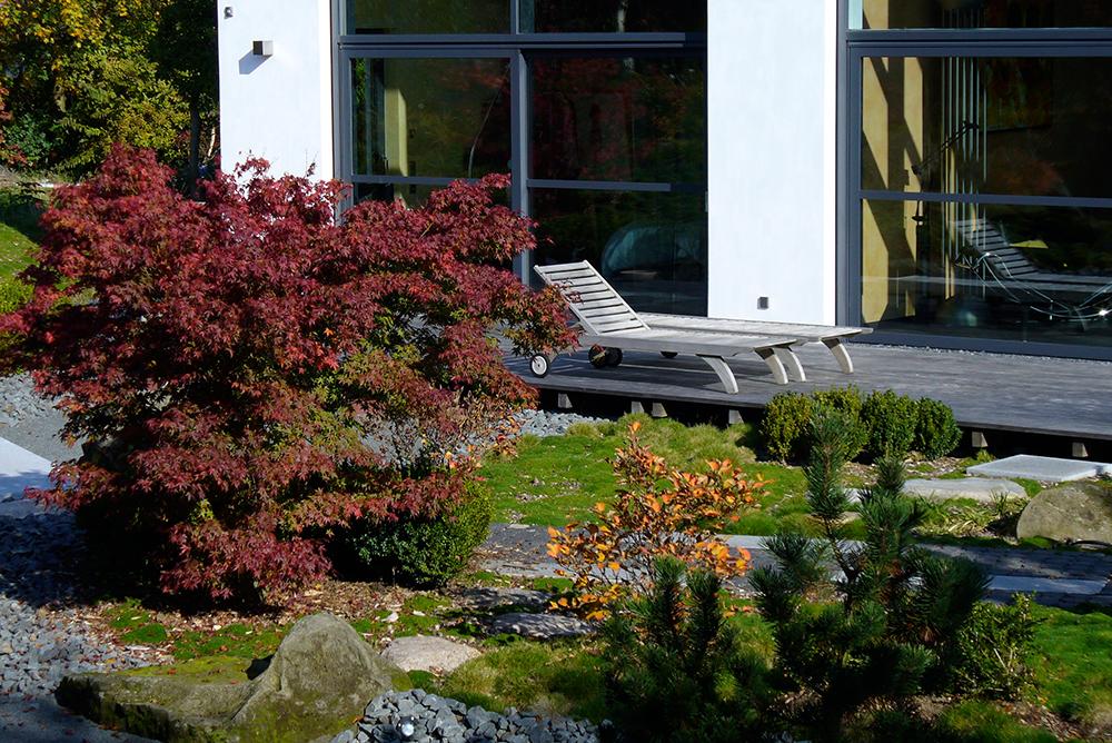 Ahorn mit Herbstverfärbung