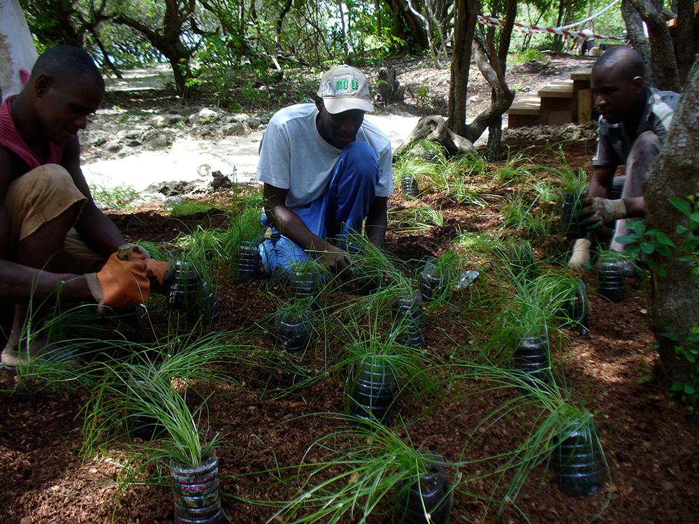 planting grasses on Vamizi island, Mozambique