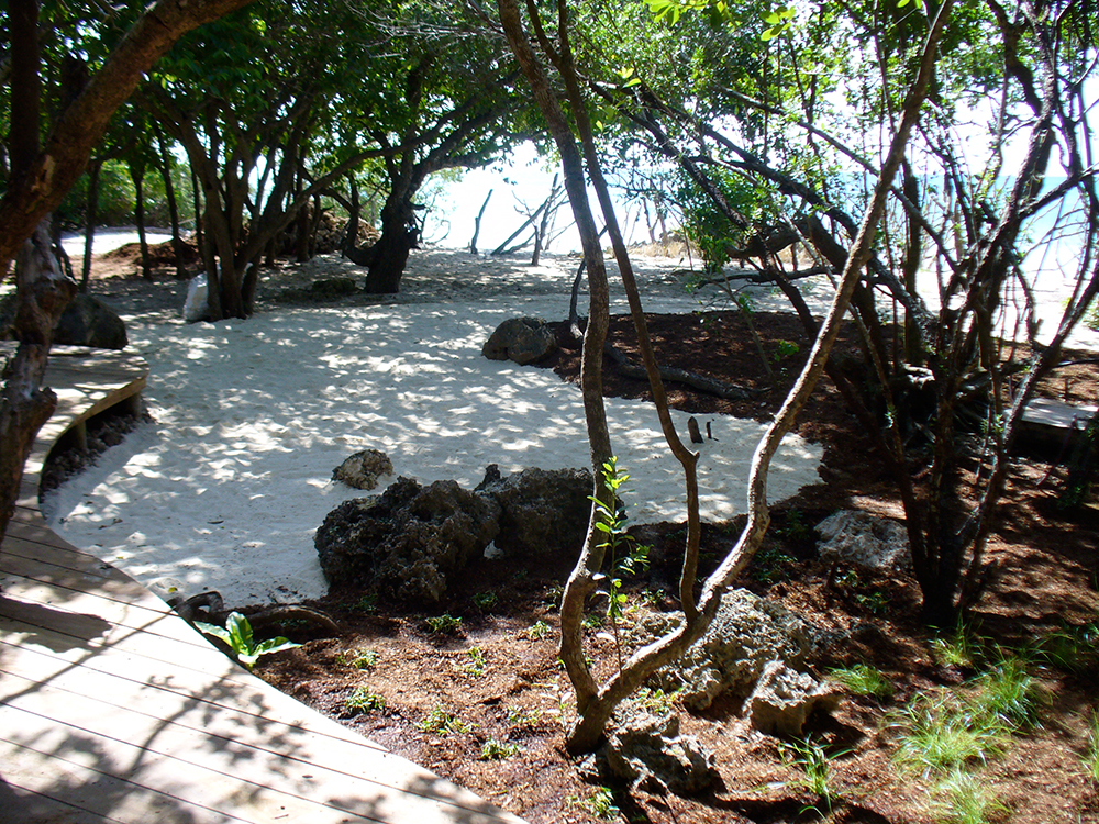 garden on Vamizi island, Mozambique
