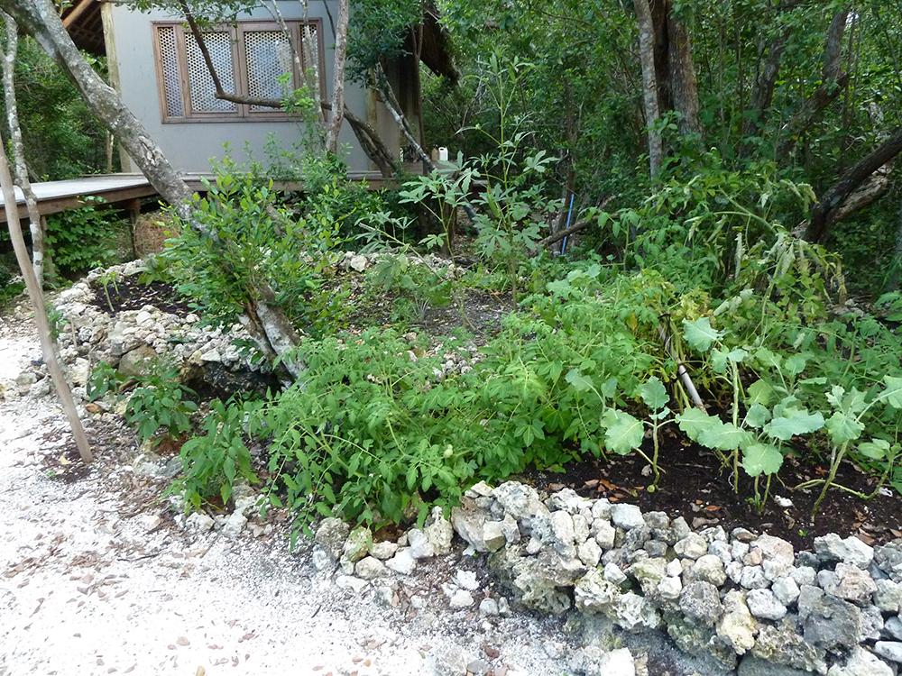 growing vegetables in africa