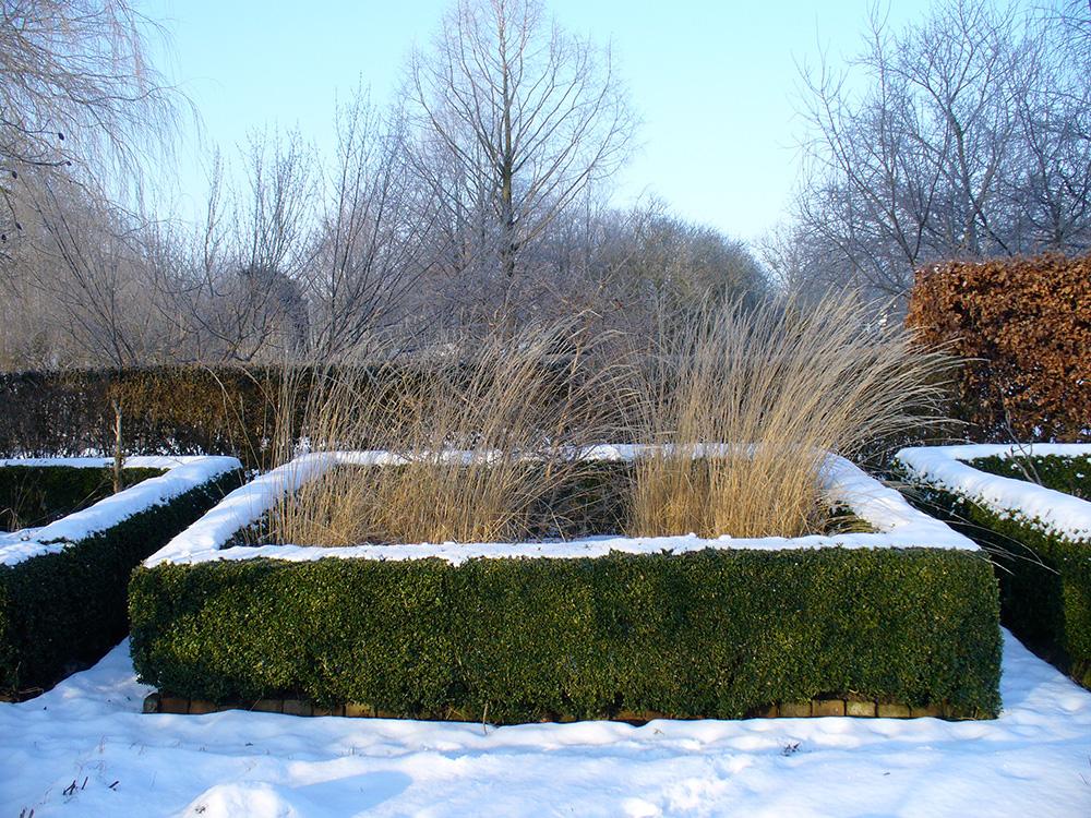 Buxhecke im Winter