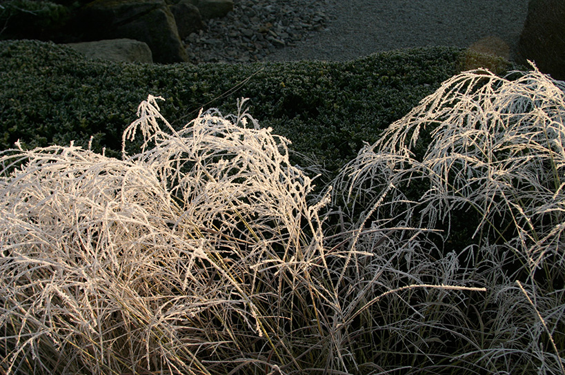 Frost und Gras